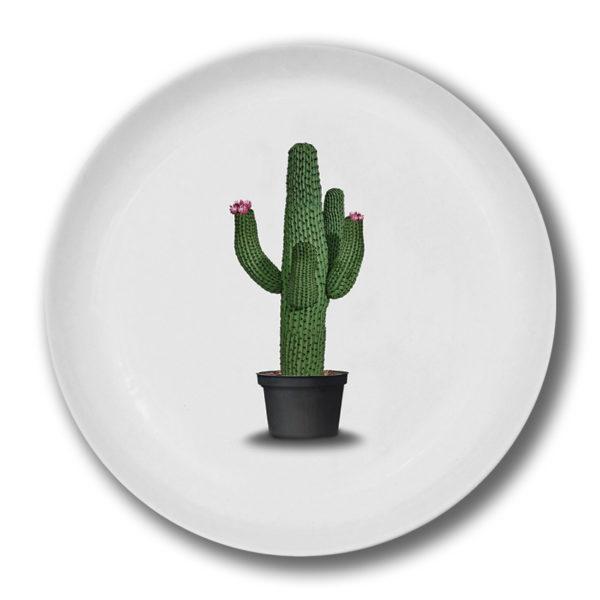 cactus(2)